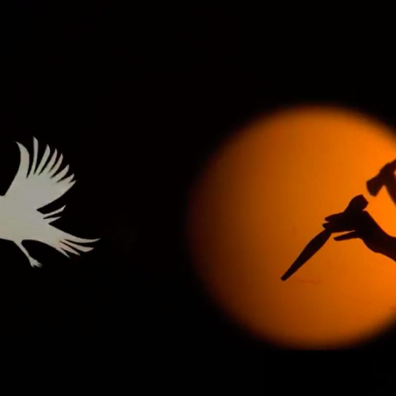 Shadow Puppet & Bird Puppet